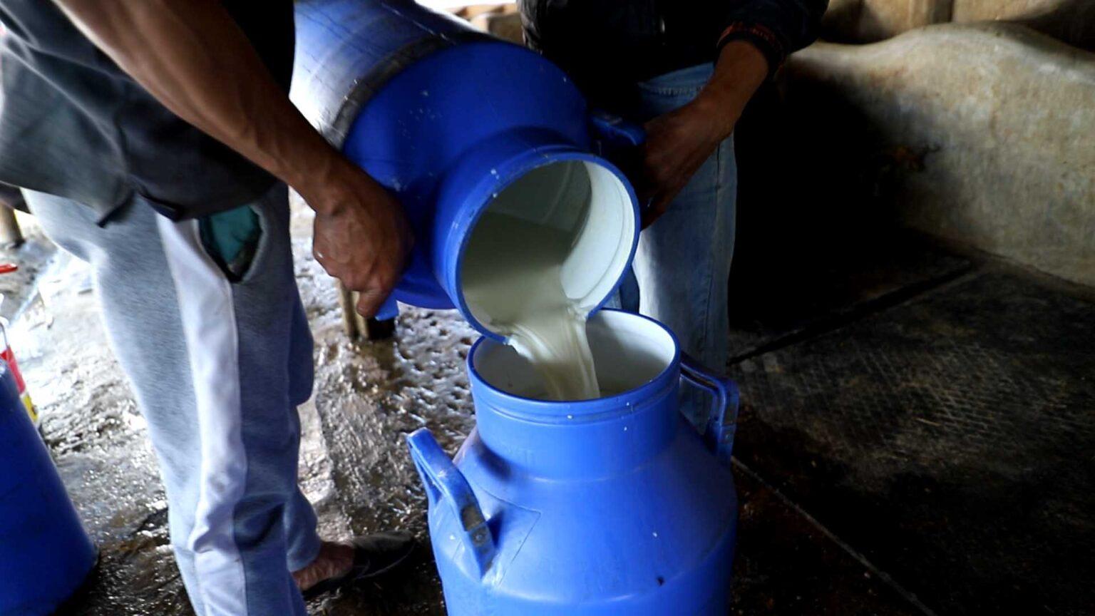 कोरोना कहर : किसानको दूध विक्री नहुँदा फाल्नु पर्ने अवस्था
