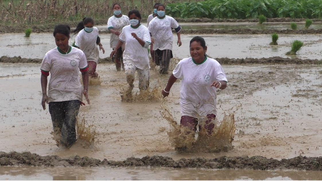 झापामा धान दिवस : कचनकवलमा हिले दौड, २० प्रतिशत रोपाइ