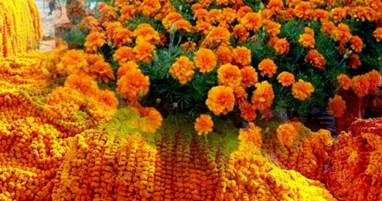 तिहारका लागि ५० हजारभन्दा बढी सयपत्री फूलको माला आयात हुँदै